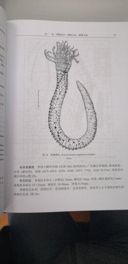 中国动物志 环节动物门多毛纲 缨鳃虫目 晒单图