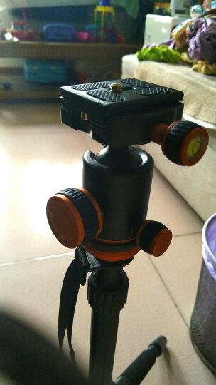 三脚架单反相机摄影摄像便携微单三角架手机自拍直播支架佳能尼康拍照DV录像户外主播桌面多功能支撑架网红 SL-288 晒单图