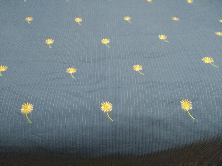 猫人家纺 夏被三件套 水洗棉床盖三件套床单单件 床罩绗缝单双人床垫罩 空调夏凉被子单人 小雏菊-蓝(白边) 230x250cm 晒单图