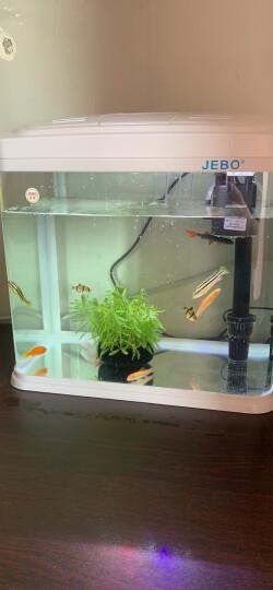 佳宝鱼缸 水族箱迷你小型金鱼缸桌面装饰造景 不含鱼缸 造景套餐A(水草4棵+布景石) 晒单图