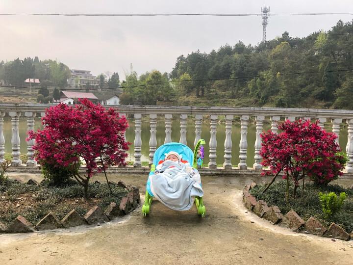 费雪(Fisher Price) 安抚小羊羔婴儿椅婴儿电动安抚椅 睡篮躺椅玩具 P2792 晒单图
