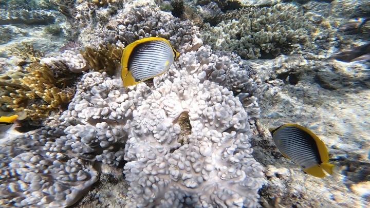 GoPro HERO6 Black黑色 4K户外水下潜水视频直播 摄像机 语音控制 防抖防水 晒单图