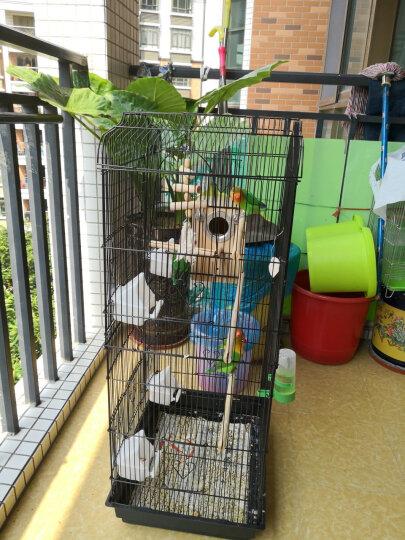 鸟类自动饮水下料器 中小型鹦鹉八哥鹩哥画眉两用鸟笼配件 喂水器【大号】 晒单图