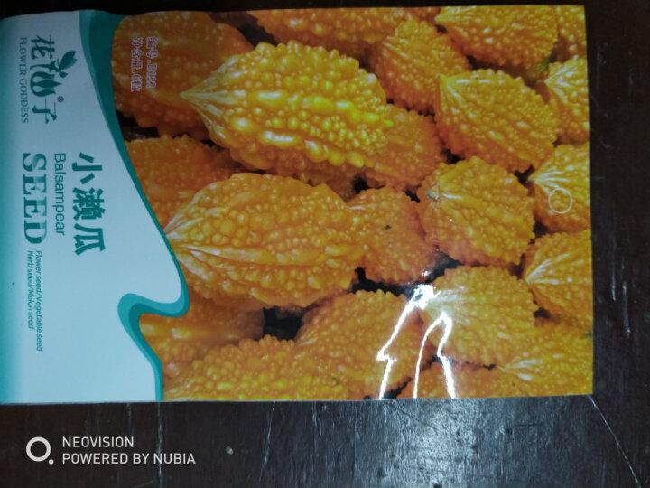 TLYY水果赖葡萄癞葡萄种子金铃子种子小癞瓜种子金癞瓜种子6粒 晒单图