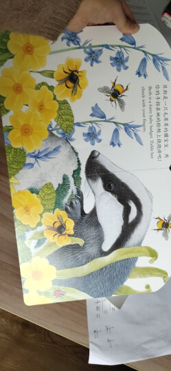亮丽精美触摸书:小兔比利(中英双语)(新版) 晒单图