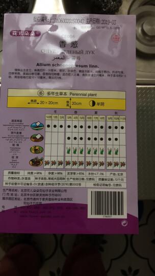 花儿朵朵 香葱 绿色 蔬菜种子 家庭阳台/园艺休闲 200粒/袋 晒单图