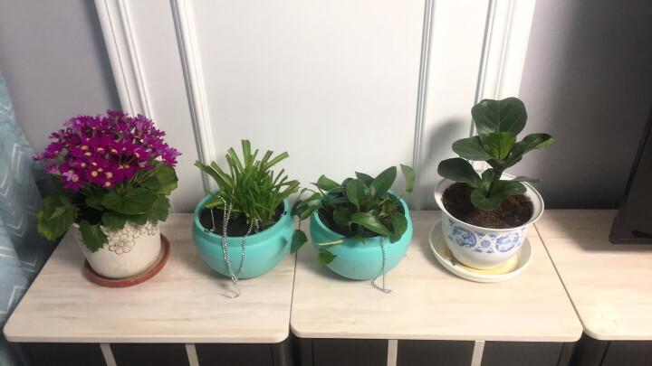 果花 塑料吊盆 蓝色大号 盆栽吊兰花盆 宜家风格自灌水型吊盆 园艺用品 不含植物 晒单图