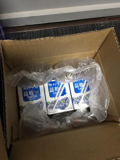 风行牛奶 蓝莓牛奶饮品 200ml*6盒 晒单图