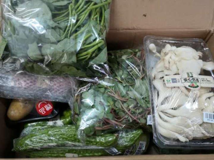 密农人家 新鲜绿皮苦瓜 鲜嫩 蔬菜 白胖苦瓜 500g 晒单图