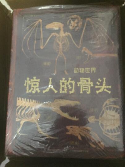 惊人的骨头:消失的恐龙+动物世界+头骨之谜(套装共3册) 晒单图