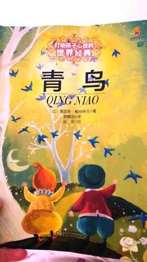 小熊温尼·菩——打动孩子心灵的世界经典童话 晒单图