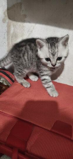 玫斯(metz) 猫粮英短美短成猫幼猫奶糕天然猫粮 全猫粮3LB/1.36kg 晒单图