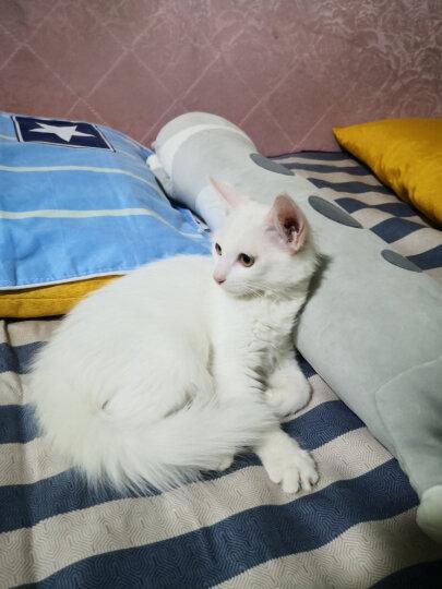 麦富迪  猫湿粮 猫罐头 猫咪罐头 拌食吞拿鱼味170g*6整箱装 晒单图