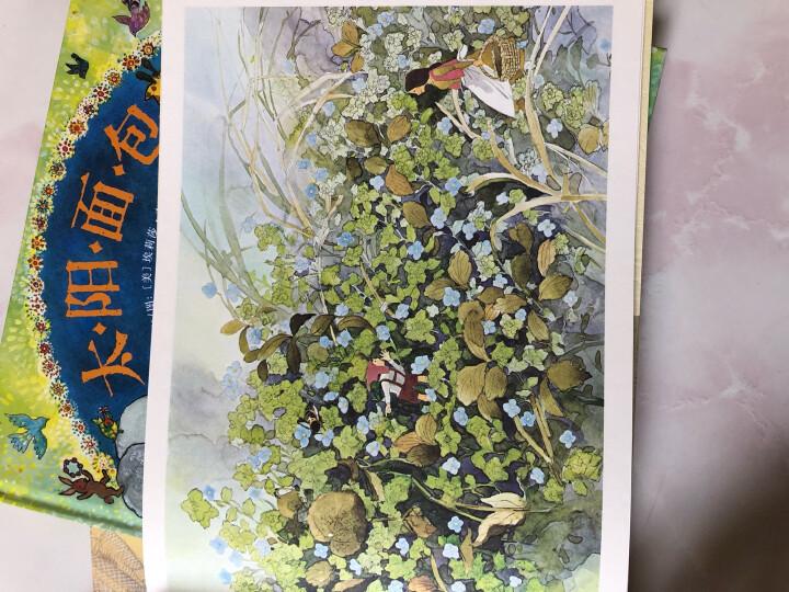 双螺旋童书:安野光雅-田野的花和小精灵 晒单图