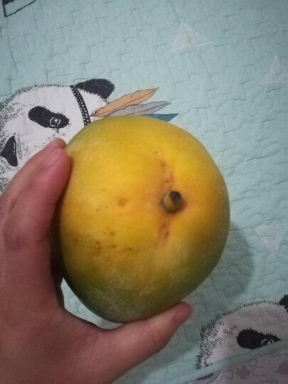 【东坡馆】青皮芒果4斤装 热带水果生鲜甜芒果 晒单图