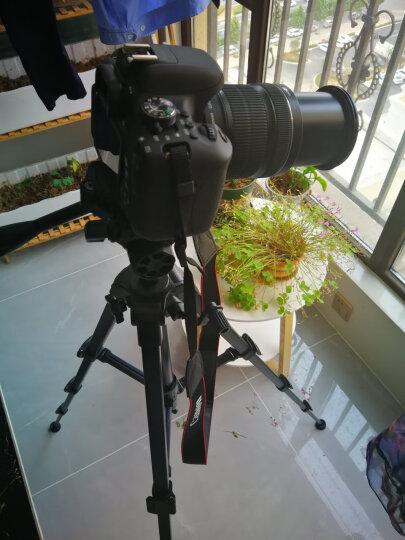 云腾 VT-688 精品便携三脚架云台套装投影仪支架微单数码单反相机摄像机旅行用 优质铝合金超轻三角架黑色 晒单图
