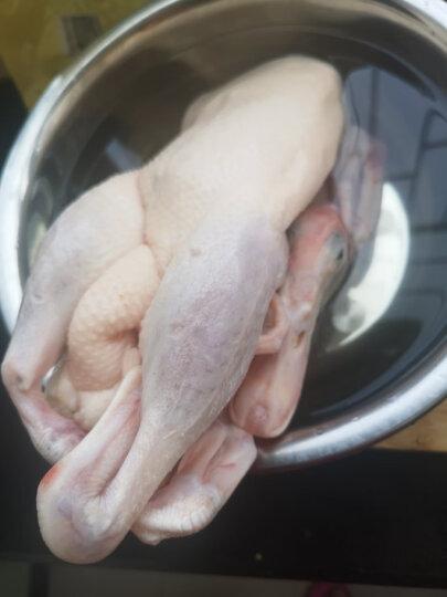 天农 供港竹丝鸡?750g?供港鸡土鸡乌骨鸡 农家散养土鸡乌鸡走地鸡 散养100天以上 晒单图