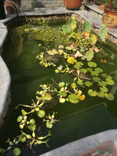 森森(SUNSUN)格池生化过滤桶锦鲤鱼池过滤器池塘过滤桶设备大型庭院  水池净化系统CPF系列 CPF-15000单桶 适合15立方水池 晒单图