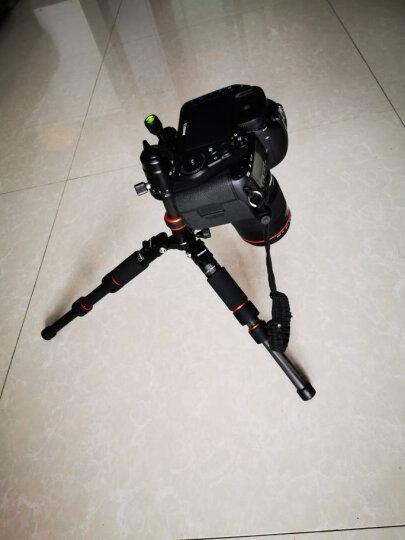 富图宝(Fotopro) M-4S 迷你专业三脚架微距单反 微单三角架轻便携三脚支架云台套装 M-4S+无线遥控套装 晒单图