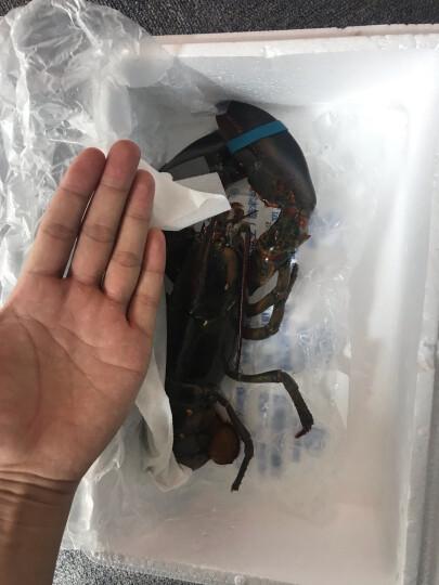 美加佳 冷冻三去章鱼 八爪鱼 250g 火锅烧烤食材 自营海鲜水产 晒单图