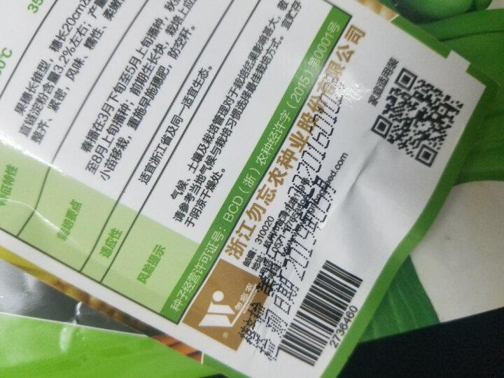 勿忘农浙凤糯3号玉米种子四季蔬菜阳台庭院种植50粒/袋 晒单图