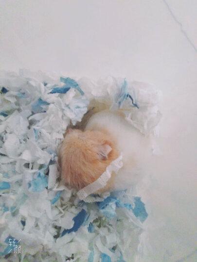洁西(JESSIE)仓鼠零食 金丝熊磨牙零食 龙猫 天竺鼠 荷兰猪磨牙训练零食 美味彩色小馒头 120克 晒单图