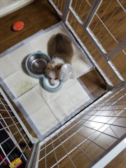 Honeycare 宠物尿垫狗狗尿片加厚狗尿布京东定制款 狗用品S码 33*45cm 100片 晒单图