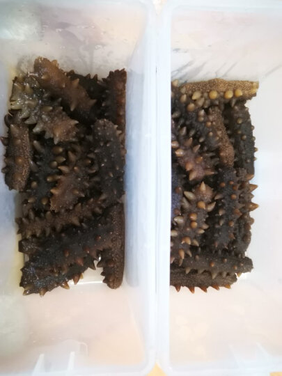 皇纯 淡干海参 500g 40-70只 御品 威海刺参 生鲜海鲜水产海参干货年货礼品礼盒 晒单图