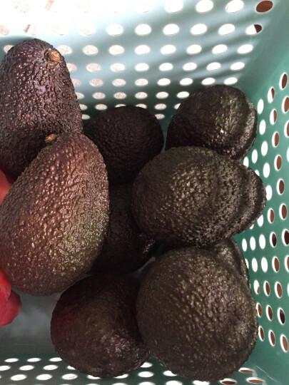品赞 墨西哥牛油果5个 单果170-200g 进口水果鳄梨新鲜进口水果 晒单图