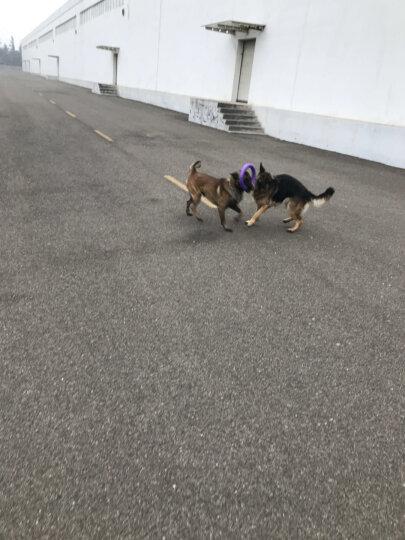 喜帅 宠物玩具 耐咬圆球 磨牙咬胶 狗狗玩具EVA材质 哈士奇金毛训练互动中大型犬狗狗玩具 晒单图