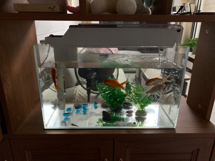 金利佳(Jeneca)鱼缸过滤器 超静音配潜水泵 外置过滤增氧生化净化循环盒三合一过滤槽 可更换过滤棉 晒单图