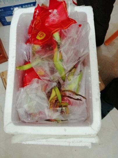 【第2件9.9元】悠乐果 越南白心火龙果3个 单果约300-450g 进口新鲜水果顺丰直发  晒单图