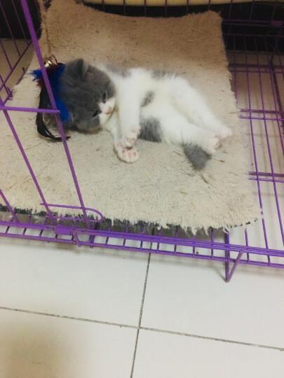 猫太郎(TheCats)宠物猫咪流质零食湿粮猫条冻干咖啡条 扇贝/鲜虾/鸡肉/三文鱼/五种口味猫条组合装50g*5包 晒单图