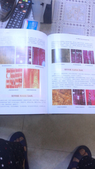 木材比较鉴定图谱 晒单图
