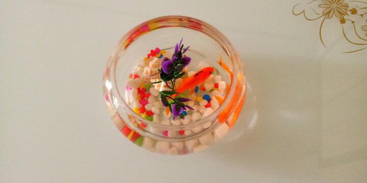 [买一送四]圆形鱼缸透明玻璃办公桌鼓缸形玻璃金鱼缸乌龟缸创意迷你小型造景水培花瓶 20D送彩石+定制篮 晒单图