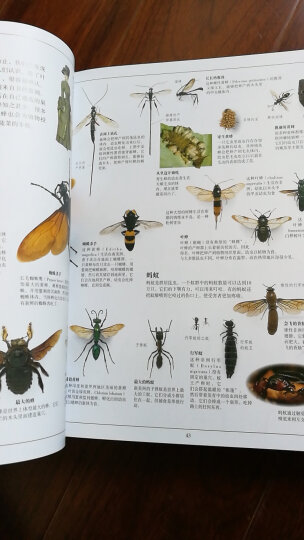 DK生物大百科 晒单图