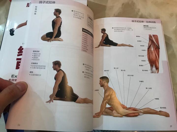 肌肉训练完全图解:拉伸训练 晒单图