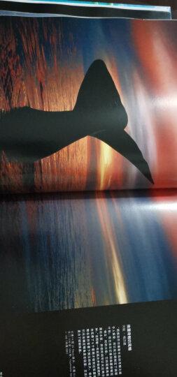 野生星球:全球自然摄影大赛获奖作品精选(精装版 全彩) 晒单图