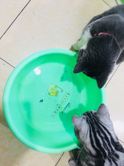 ROYAL CANIN 皇家猫粮 I27 Indoor27室内成猫猫粮 全价粮 0.4kg 减少粪便异味 促进肠道毛球排出 晒单图