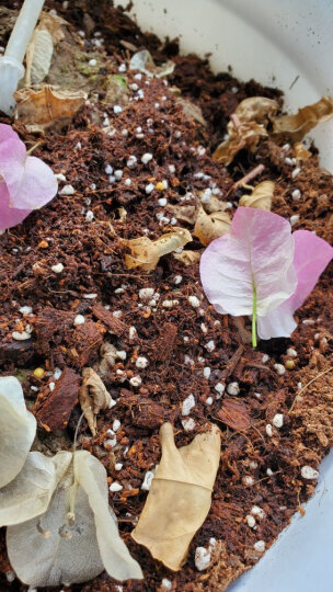 美乐棵 玫瑰月季型营养土6L/袋 家庭园艺种植基质土 办公室阳台桌面盆栽种植土 晒单图