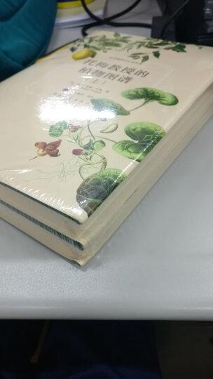 托梅教授的植物图谱(套装上下册) 晒单图