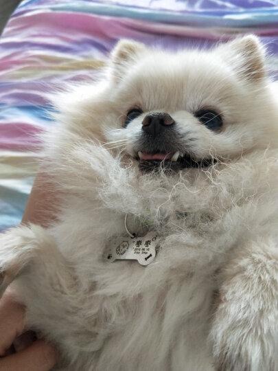 格莱摩尔 (Glamour)宠物除螨灭真菌猫狗通用全能喷剂60ml 晒单图
