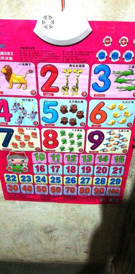 乐乐鱼发音有声挂图儿童早教玩具宝宝识字有声卡片幼儿启蒙认知学习玩具三字经弟子规篇 晒单图