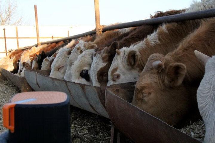 英美尔 肉羊预混料 羊饲料  育肥羊催肥增重长膘块 肉羊添加剂 加快出栏 直供养殖厂饲料 羔多旺 1吨 晒单图