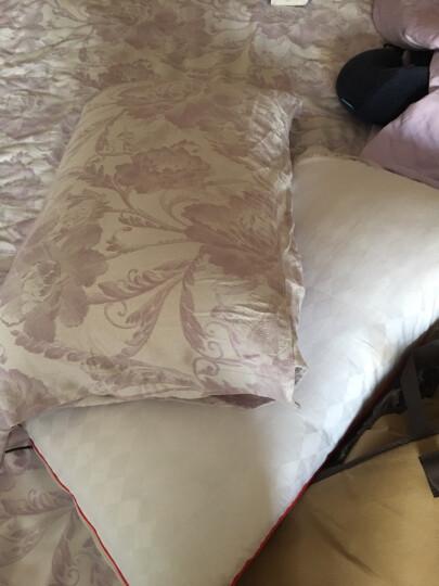 丝煌100%桑蚕丝枕头枕芯颈椎枕头芯单人全棉 儿童高枕(32x55)蚕丝500克 1只 晒单图