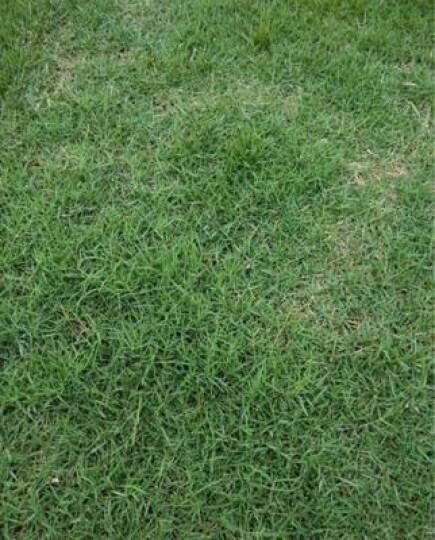颜集卉 C蔬菜种子四季播阳台种菜庭院秋冬萝卜 茄子30粒 晒单图