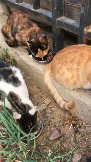 优朗(U-BRIGHT) 宠物幼猫成长配方猫粮 2kg 晒单图