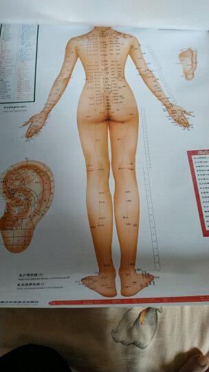 人体经络穴位标准挂图正侧背女性3张/套赠解说册 中医养生穴位图 男性经络挂图 家庭保健图 晒单图