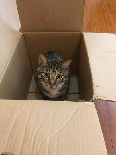 宠幸(CHOWSING) 猫砂 松木猫砂 原味6L(2.5kg) 猫咪用品非结团膨润土豆腐猫沙 晒单图