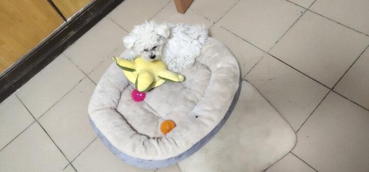 宜特狗玩具 耐咬 发声刺球 大中小型犬玩具 弹力球 洁齿 互动训练球玩具 训犬用品 大号刺球(绿色) 晒单图